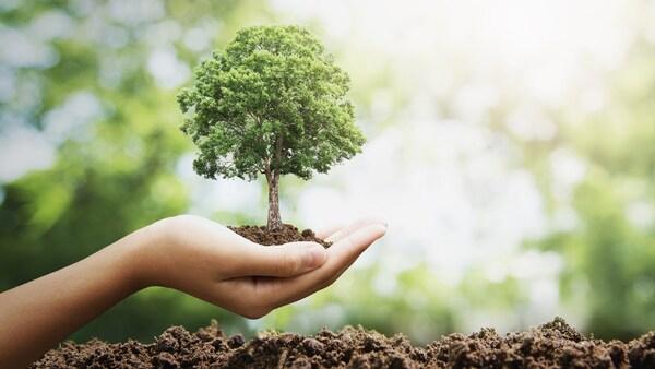 Створюємо ліси разом»: на Прикарпатті висадять понад два мільйони саджанців  | Український Простір Прикарпаття
